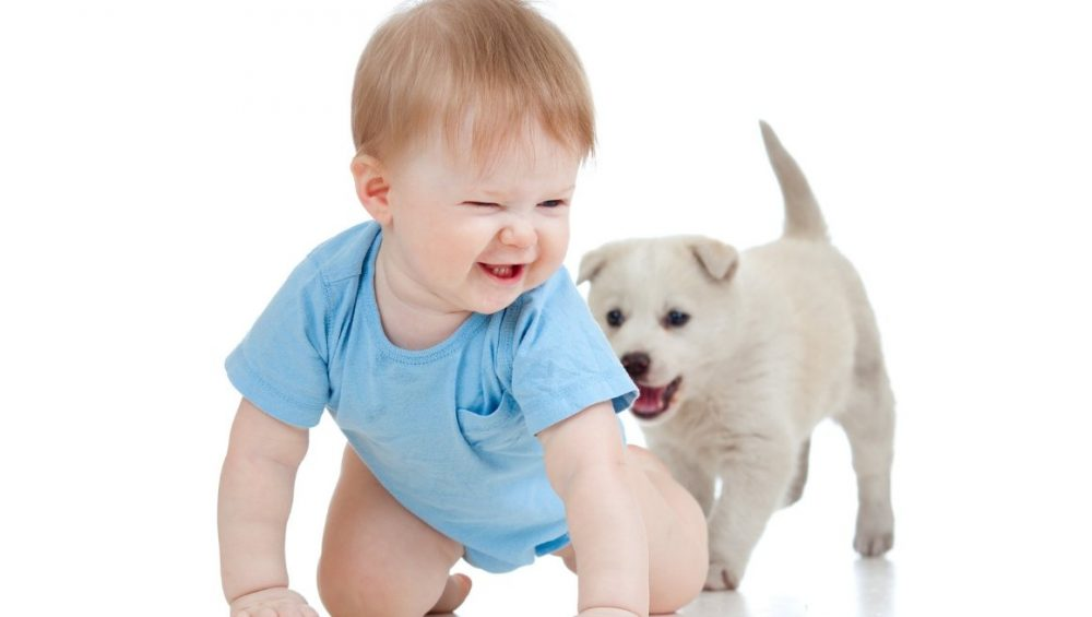 5 Tips for Introducing Dog to Baby