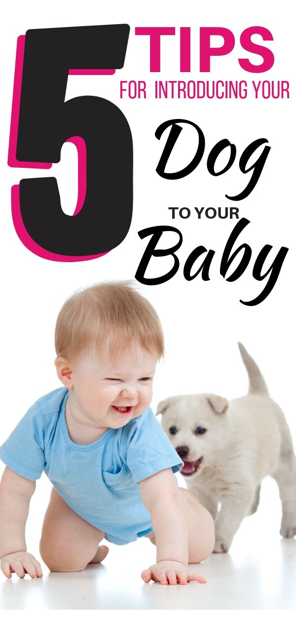 5 simple tips for helping you smoothly introduce your dog to your baby - safely and with confidence! Plus a FAQ section!