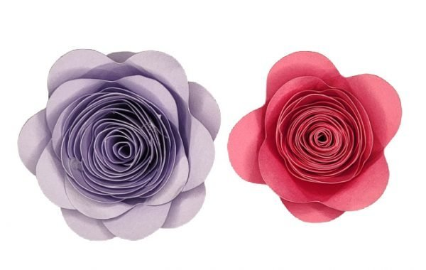 two rolled paper flowers made using a cricut machine.Oneis pink and one is purple. Both were rolled a bit differently.