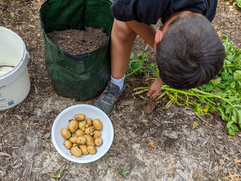 Guide To Starting A Kids vegetable garden (and How to plant potatoes!)